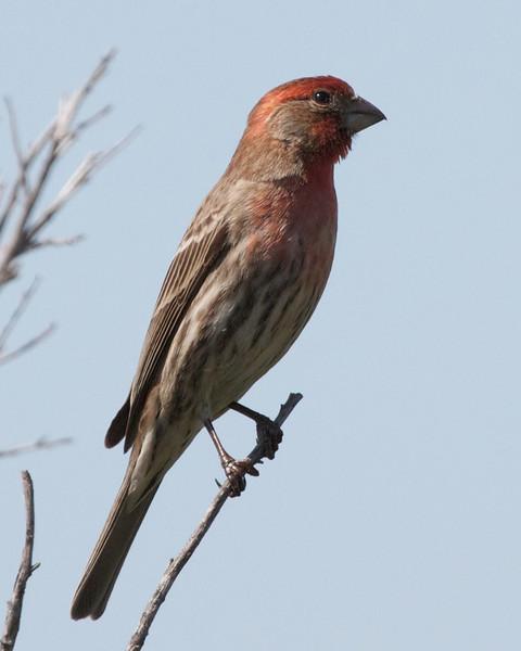 bird  10118.jpg