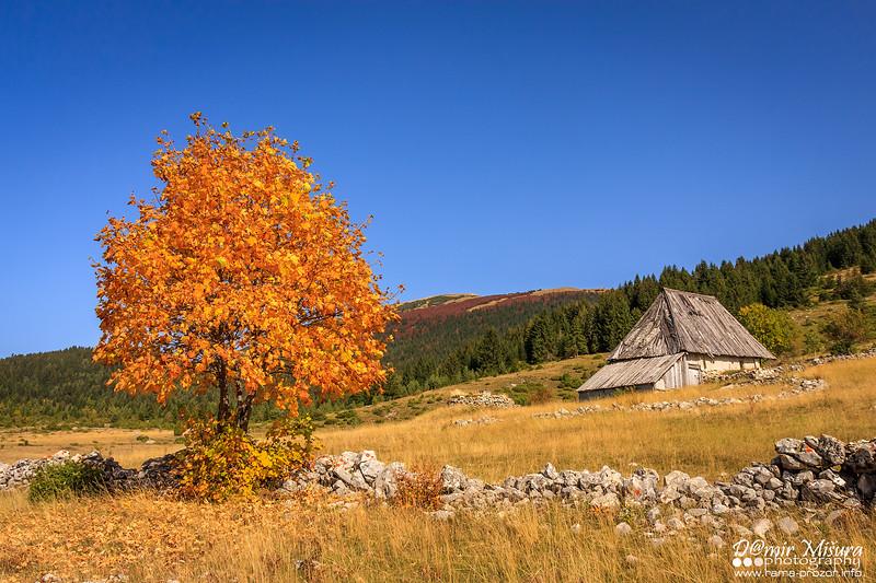jesen_sonestrane.jpg