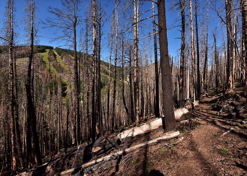 NEA_0338-7x5-Fire Damange 2 yrs later.jpg