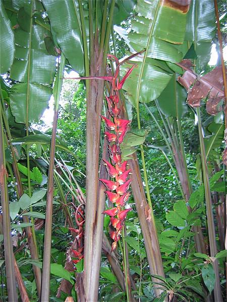 De jungle van Tortuguero, Costa Rica.