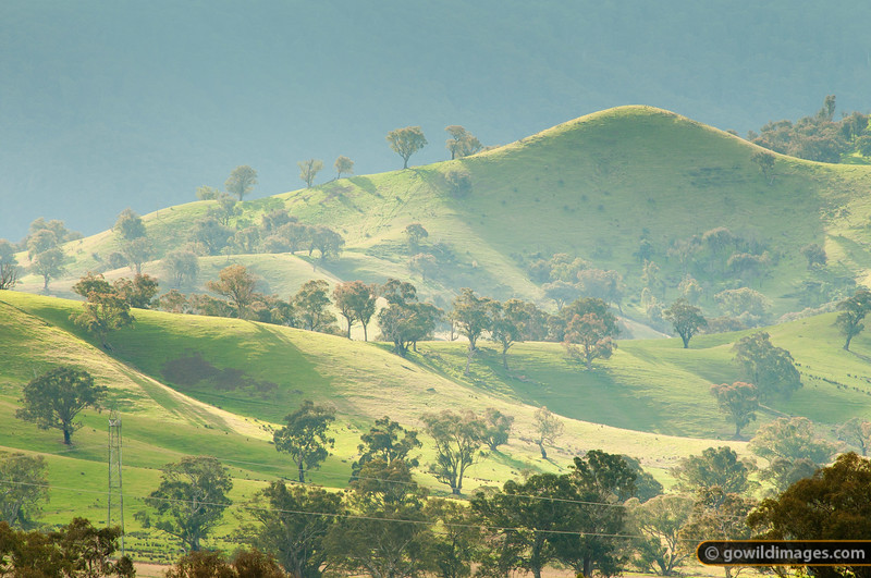 Late afternoon haze over rolling hills with trees and a transmission power line cutting through