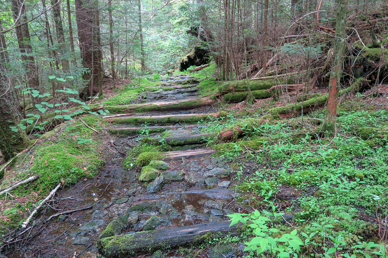 Mountains-to-Sea Trail -- 5,500'