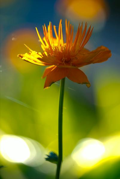 flowerorange 4x6_4695.jpg