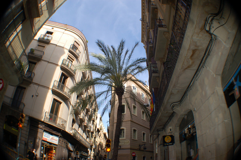 Barcelona - you don't see a palm tree in the middle of a city block too often.
