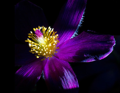 Calendars Against Cancer :: A Year in Bloom 2014