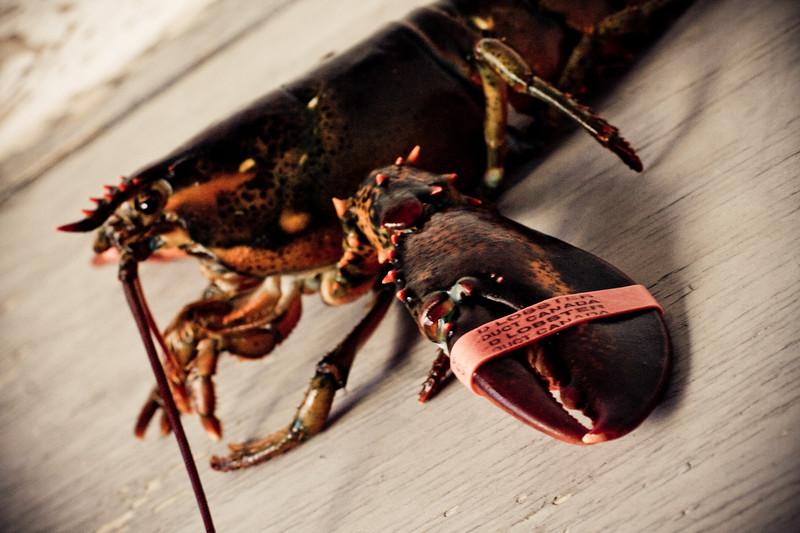 lonely-lobster_4216638088_o.jpg