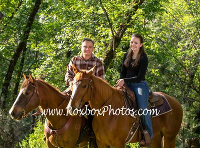 Sullivan Horses