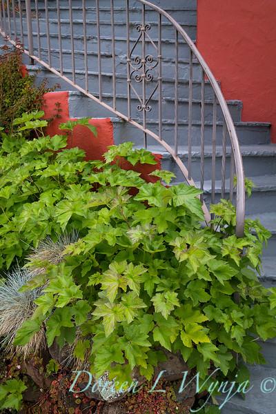 Anemone x hybrida 'September Charm' foliage planter along stairway_2438.jpg