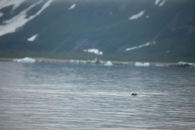 Alaska Copper River-9782.jpg