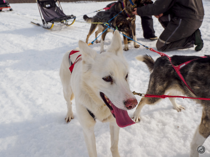 20190325_Blaire_and_Liz_Mushing_20.jpg