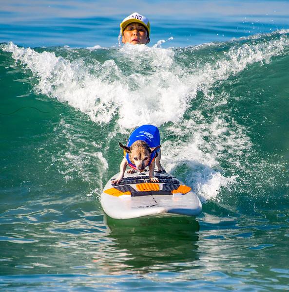 Surfing Dogs-19.jpg