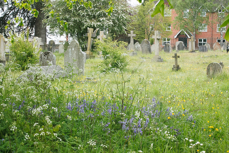 The Cemetary, picture perfect with the Spring flowers.