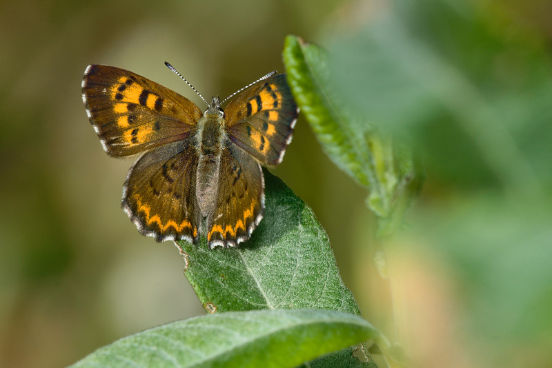 Mariposa Copper