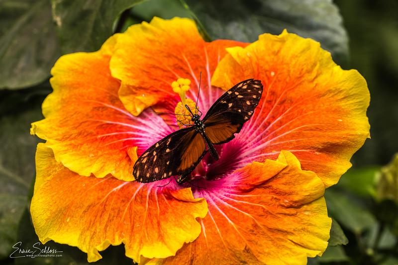 Tucson Botanical Garden 4-25-2018g-5308.jpg
