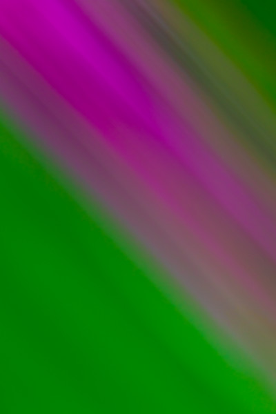 Streaked green and purple lines make for interesting background shapes and textures