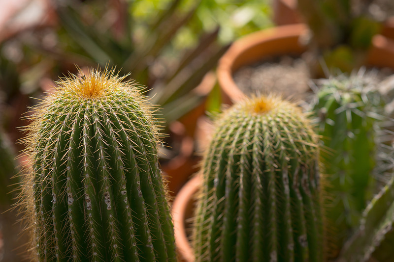 htx-cactus-space018.jpg