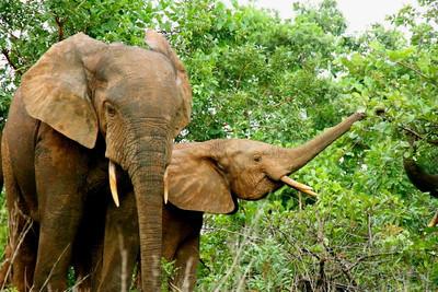 Luke's Ghana Photos