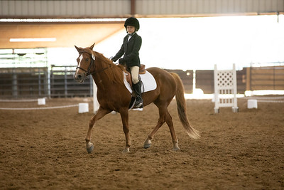 Horse 33