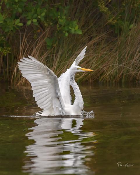 Florida: Alafia River area