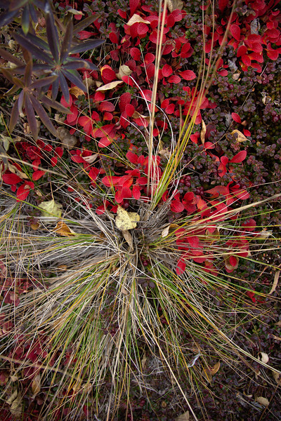 Grasses and Cranberries