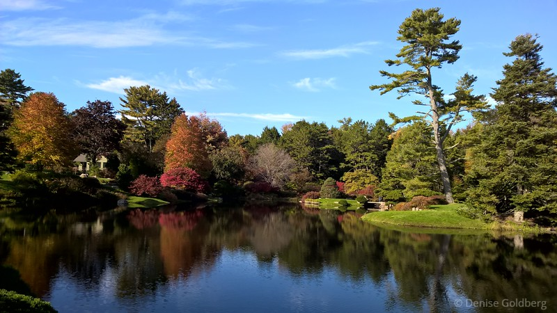 autumn colors, at Asticou Azalea Garden