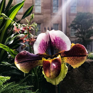 Orchids at the Portrait Gallery