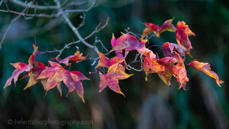 Himalayan Garden Oct 18-66.jpg