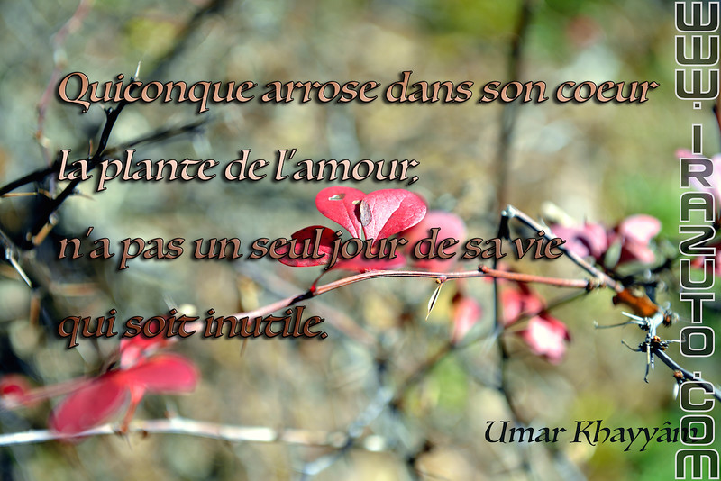 amour5