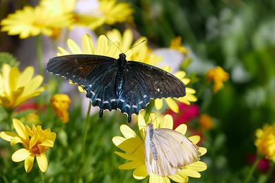 Desert Botanical Garden & Butterfly Pavilion