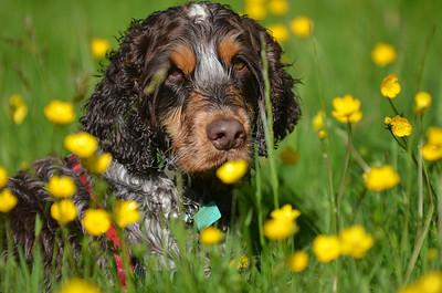 Jasper and friends (Dogs)