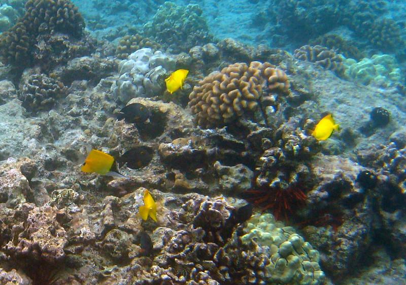 519- 20080416- Hawaii 20-Snorkelling IMG_0777.jpg
