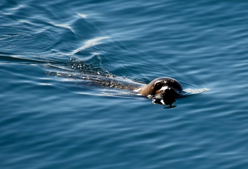Harbor Seal 1.jpg