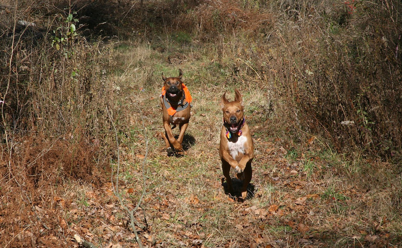 Lucky and Dex on the Run at DH