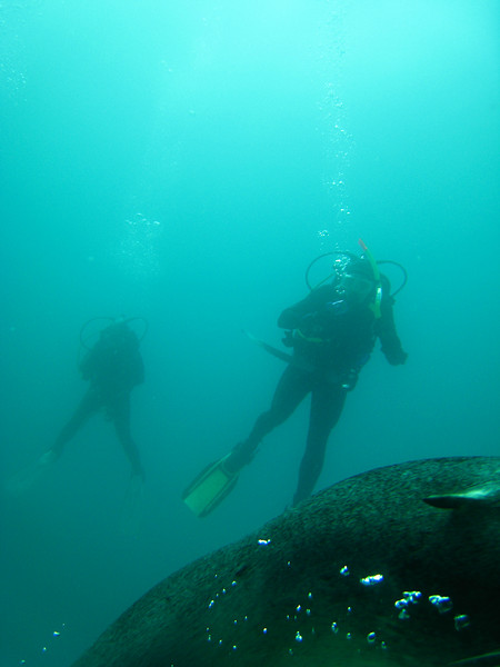 Diving in the Galapagos (117 of 392)