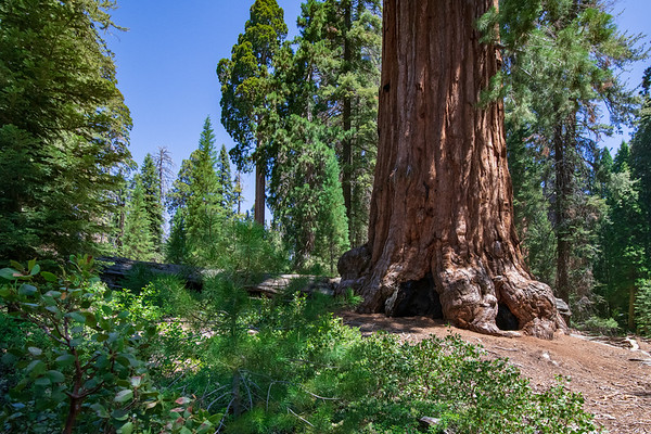 Sequoia & King's Canyon, CA (104 Images)
