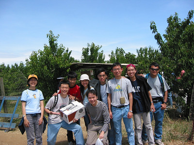Cherry Picking, 2002