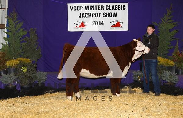 VCCP 2014 Heifer Backdrop