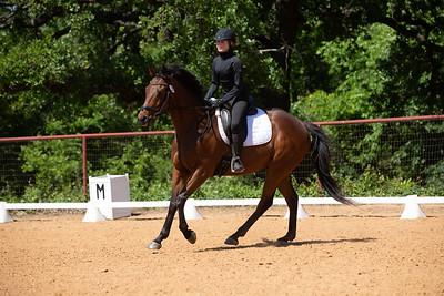 Horse 233