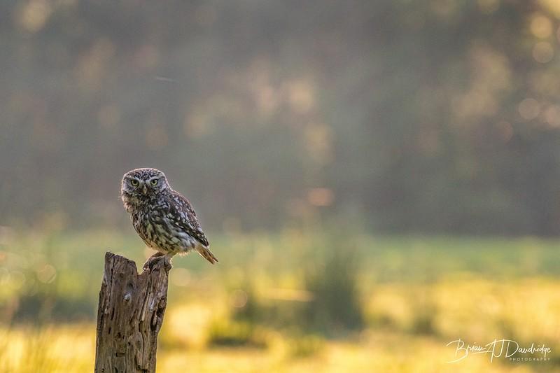 The Little Owl Shoot-6136.jpg