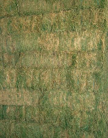 Standard Alfalfa