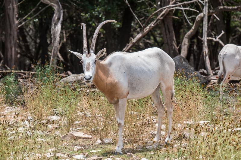 Wildlife Ranch-0253.jpg