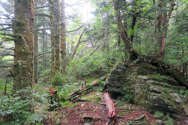 Grandfather Trail -- 5,840'