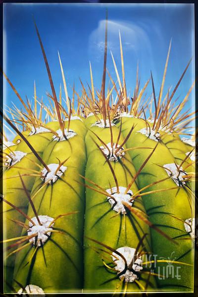 cactus-blueSky.jpg