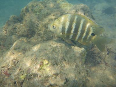Oahu Fish