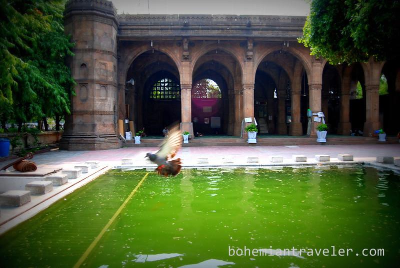 pigeon at Siddi Sayid's Mosque 1573 Ahmedabad India.jpg