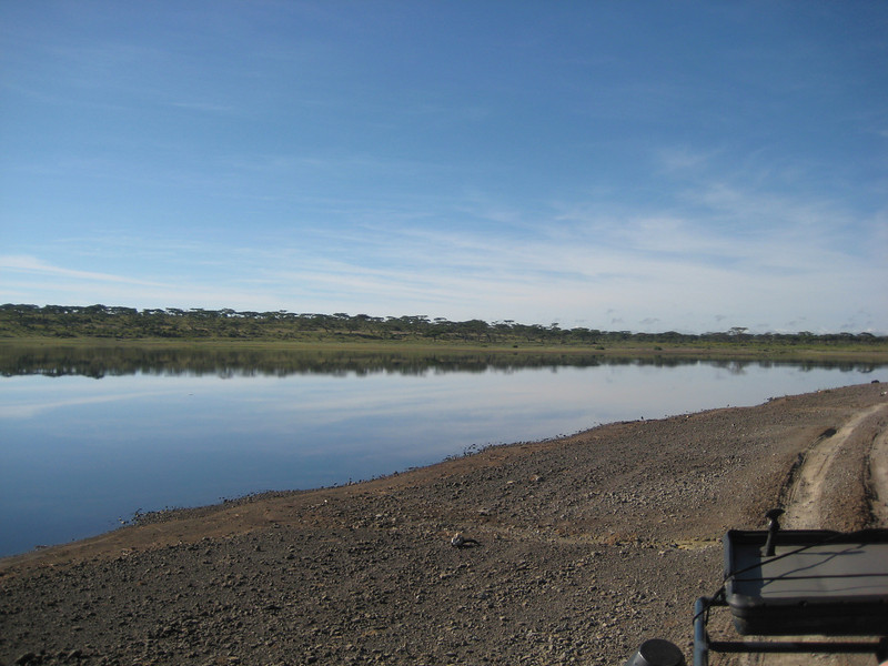 Ndutu watering hole.JPG