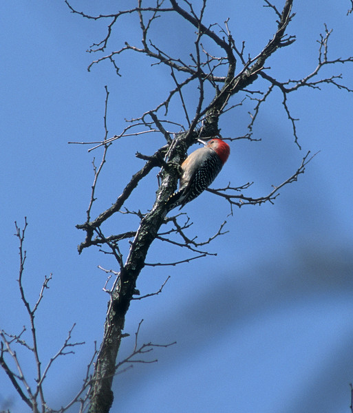 Drumming Away