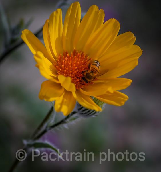 Bee Happy  - BH4