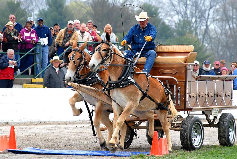 Mule Day 2008