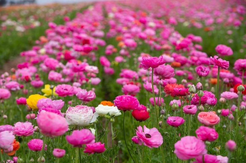 Spring Flowers B-298.jpg